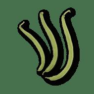 Haricot Bean